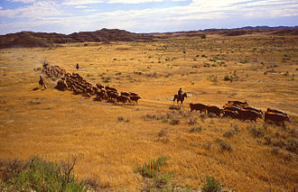 Land degradation - Overgrazing by livestock can lead to land degradation