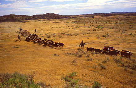 Overgrazing by livestock can lead to land degradation Cattle.jpg