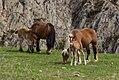 Cavalls pastant.jpg