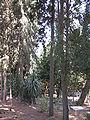 Cemetery of Kibutz Yagur IMG 2942.JPG
