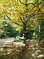 Center Parcs De Kempervennen (80515611).jpeg