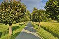 Cesta ke hřbitovu, Věrovany, okres Olomouc.jpg