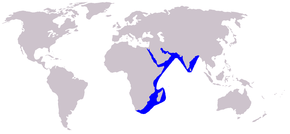 Description de l'image Cetacea_range_map_Indian_Humpback_Dolphin.PNG.