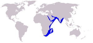 Humpback dolphin - Image: Cetacea range map Indian Humpback Dolphin