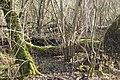 """Chablis dans la forêt alluviale """"primaire"""".jpg"""