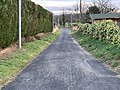 Chemin Pins St Jean Veyle 2.jpg