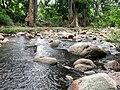 Chinnar River @ Chinnar Wildlife Sanctuary - panoramio.jpg