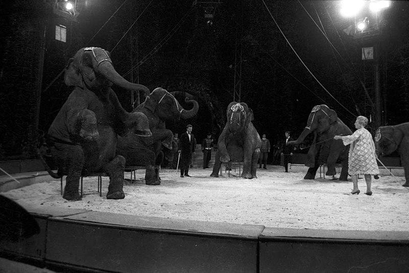 File:Circus Krone (Kiel 43.727).jpg