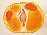 Citrus unshiu 20101118 c.jpg