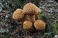 Ciuperci (43701907264).jpg