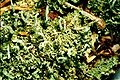 Cladonia macilenta var. bacillaris-4.jpg