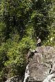 Cliff Jumping (5480590530).jpg