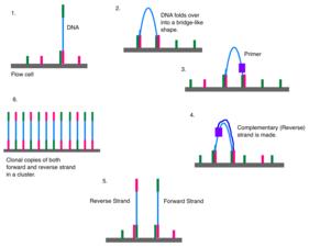 the workflow of data analysis using stata pdf