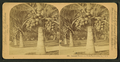 Cocoanut (coconut) trees in the white sands of Florida, U.S.A, from Robert N. Dennis collection of stereoscopic views 6.png