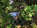 Coolest spring of balabagan pic-7.jpg