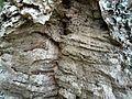 Cork bark (3181616839).jpg