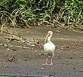 Costa Rica 1.DSCN1516-new2 (30322904363).jpg