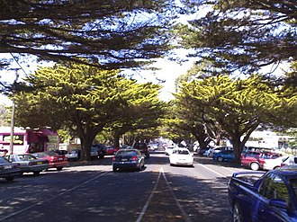 Cowes, Victoria - Golden Cypress trees on Thompson Avenue