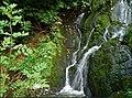 Crawfordsburn Glen near Bangor (15) - geograph.org.uk - 555608.jpg