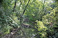Creek in Coldwater Springs Nature Area Northville Michigan.JPG