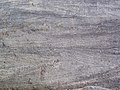 Cross-bedding in quartzite (Baraboo Quartzite, upper Paleoproterozoic, ~1.7 Ga; Tumbled Rocks Trail, Devil's Lake State Park, Wisconsin, USA) 12 (18819496401).jpg