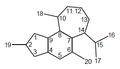Crotofolano - Numeración.png