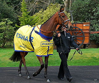 Cue Card (horse) British-bred Thoroughbred racehorse
