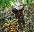 Cueillette en Afrique.jpg