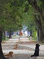 Curico, alameda con perros (9020282459).jpg
