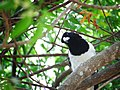 Curious Magpie (188688549).jpeg