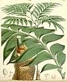 Curtis's botanical magazine (8272652226).jpg
