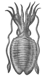 Tentacle varied organ found in many animals and used for palpation and manipulation