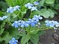 Cveće u proleće - panoramio - spaceman117 (2).jpg