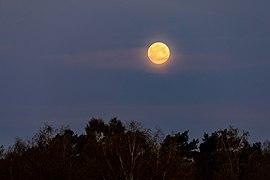 Dülmen, Hausdülmen, Mond über Schmalo -- 2020 -- 6307.jpg