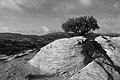 Dana - panoramio (1).jpg