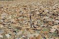 Dana Plateau Plot 112 (11878805323).jpg