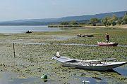 Danube near Brza Palanka (Брза Паланка) 04.jpg