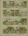 De duif en de mier-Catchpenny print-Borms 0342.jpeg