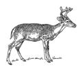 Deer 1 (PSF).png