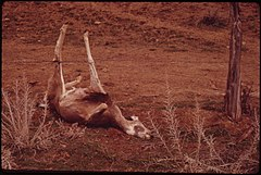 Deer Entangled in a Barbed Wire Ranch Fence in Piceance Basin, 04-1973 (3815849374).jpg