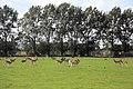 Deer enclosure on the Denham Estate - geograph.org.uk - 949635.jpg