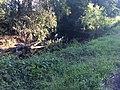 Delaneys creek.jpg