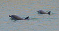 Delfines-gijon-3.jpg
