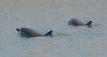Delfines-gijon-3