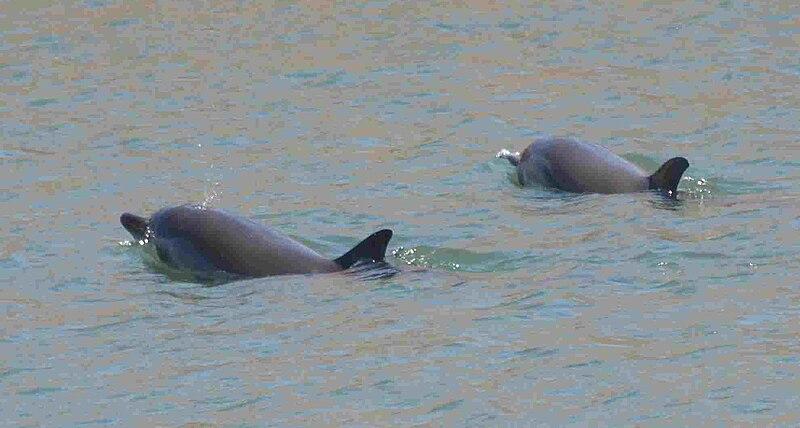 File:Delfines-gijon-3.jpg