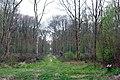 Dering Wood - geograph.org.uk - 398030.jpg