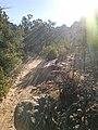 Devil's Bridge Trail, Sedona, Arizona - panoramio (27).jpg
