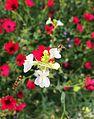 Devouring Nectar.jpg