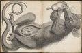 Didelphis cancrivora - 1700-1880 - Print - Iconographia Zoologica - Special Collections University of Amsterdam - UBA01 IZ20300090.tif