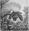 Die Gartenlaube (1878) b 139.jpg